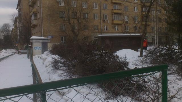 Уничтожение деревьев на ул.Народного ополчения_6