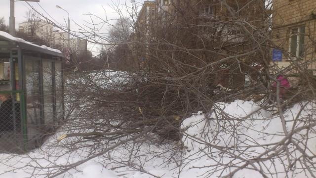 Уничтожение деревьев на ул.Народного ополчения_7