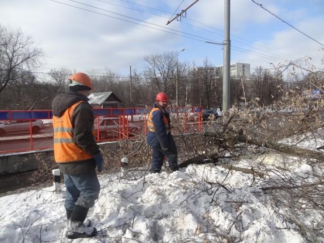 Уничтожение деревьев на ул.Народного ополчения_24