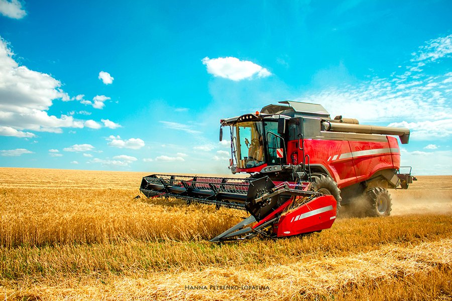 harvester-harvests-wheat-on-field,-blue-sky.jpg