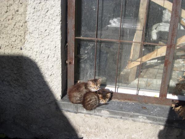 Кошки города Зеленоградска (Калининградская область
