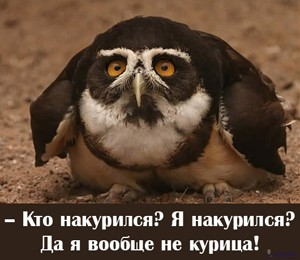 sova2