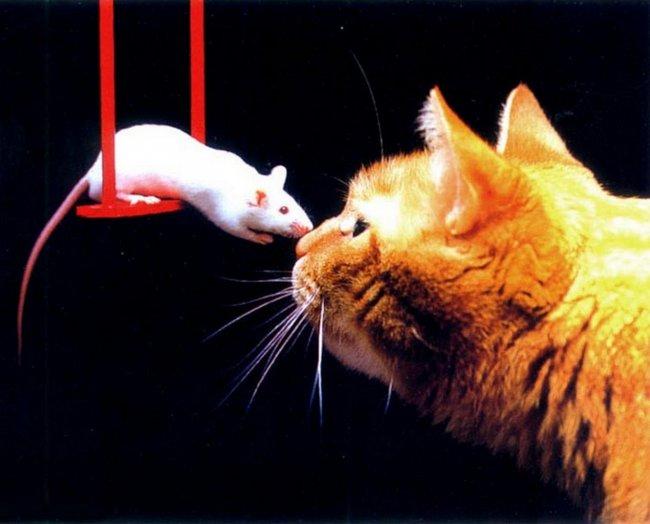 Кошки-мышки Фото и видео приколы, самое шокирующее видео.