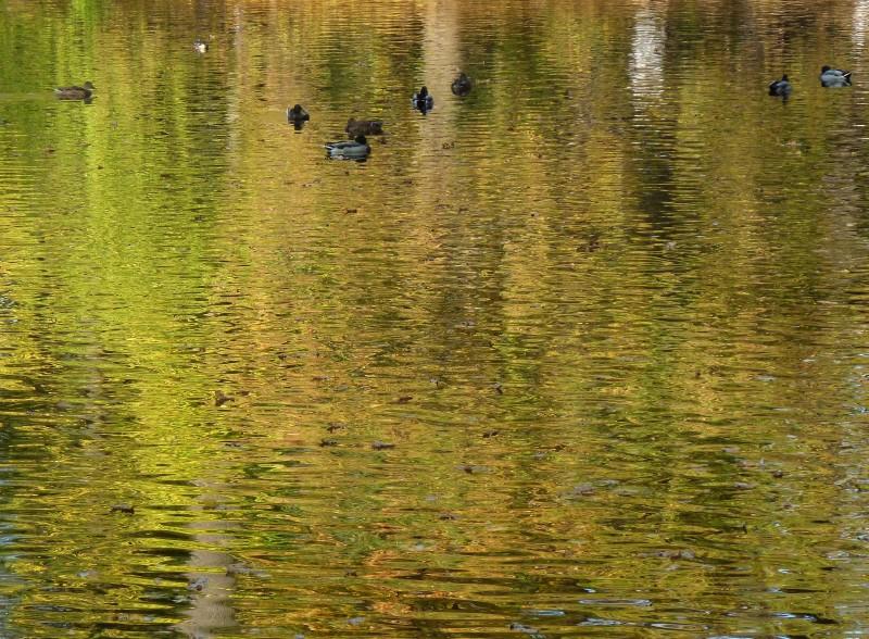 Золотая вода...