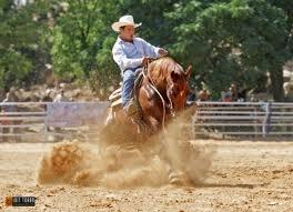 лошади2