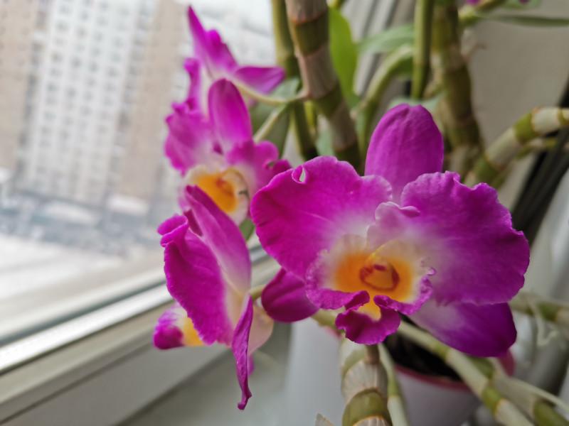 Мои орхидеи IMG_20200204_140015.jpg