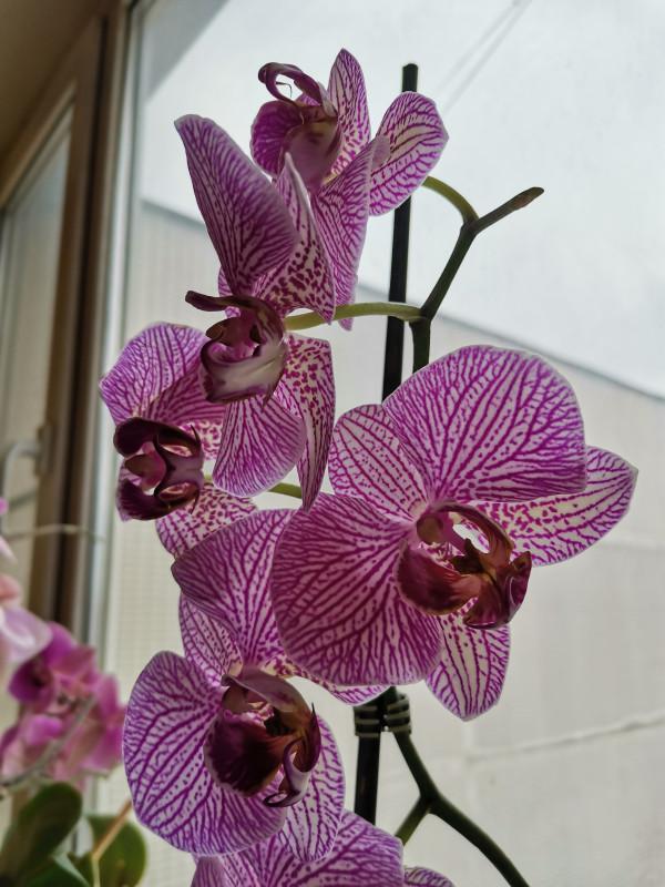 Мои орхидеи IMG_20200204_135937.jpg