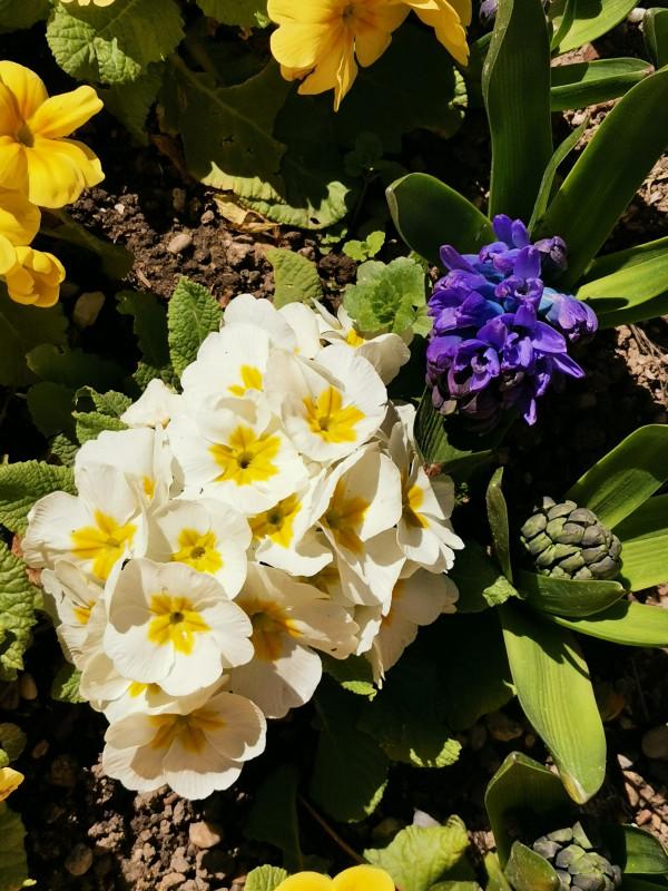 Весна в саду дворца Долмабахче