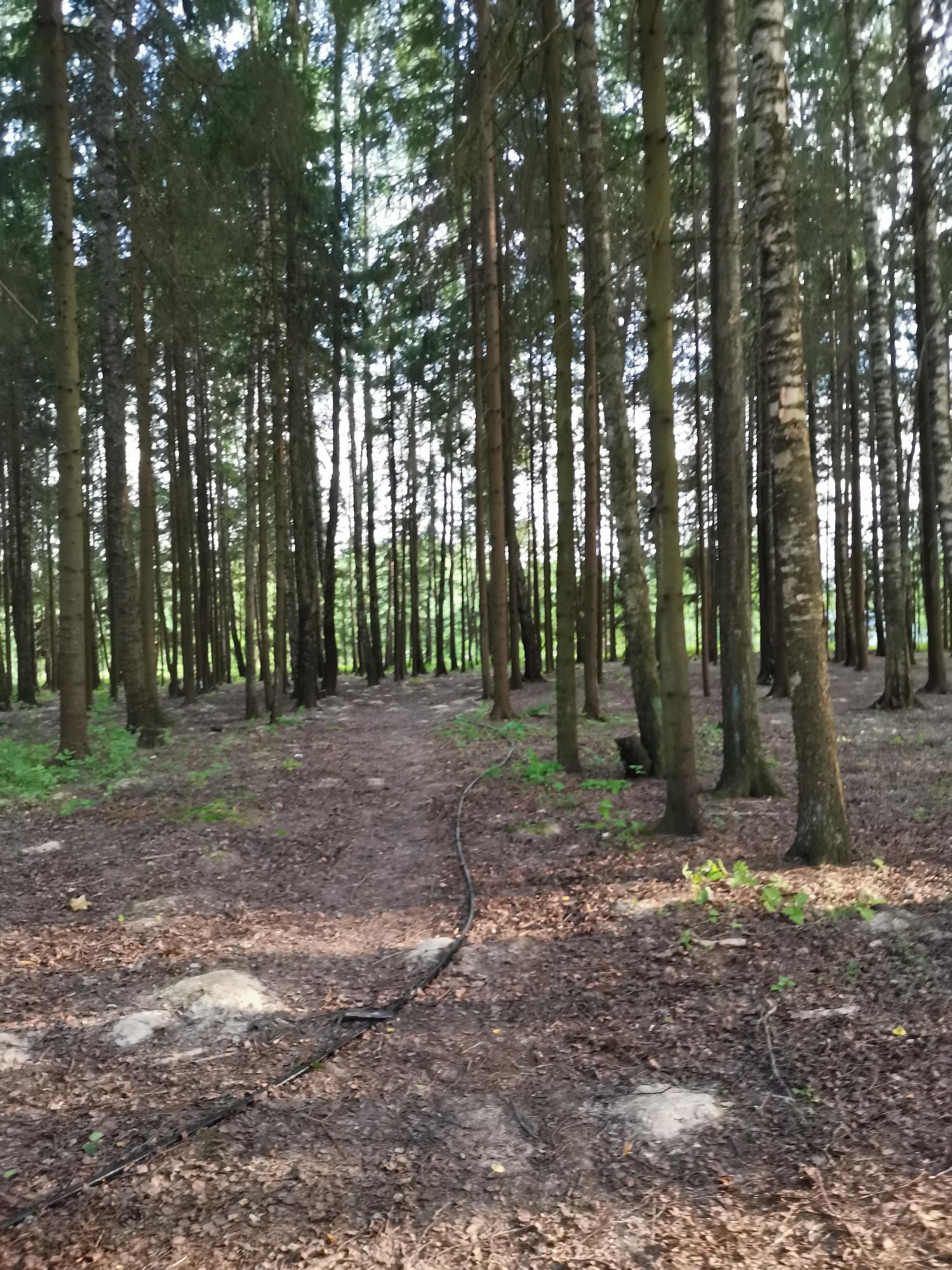 Проход в зону кемпинга через лес