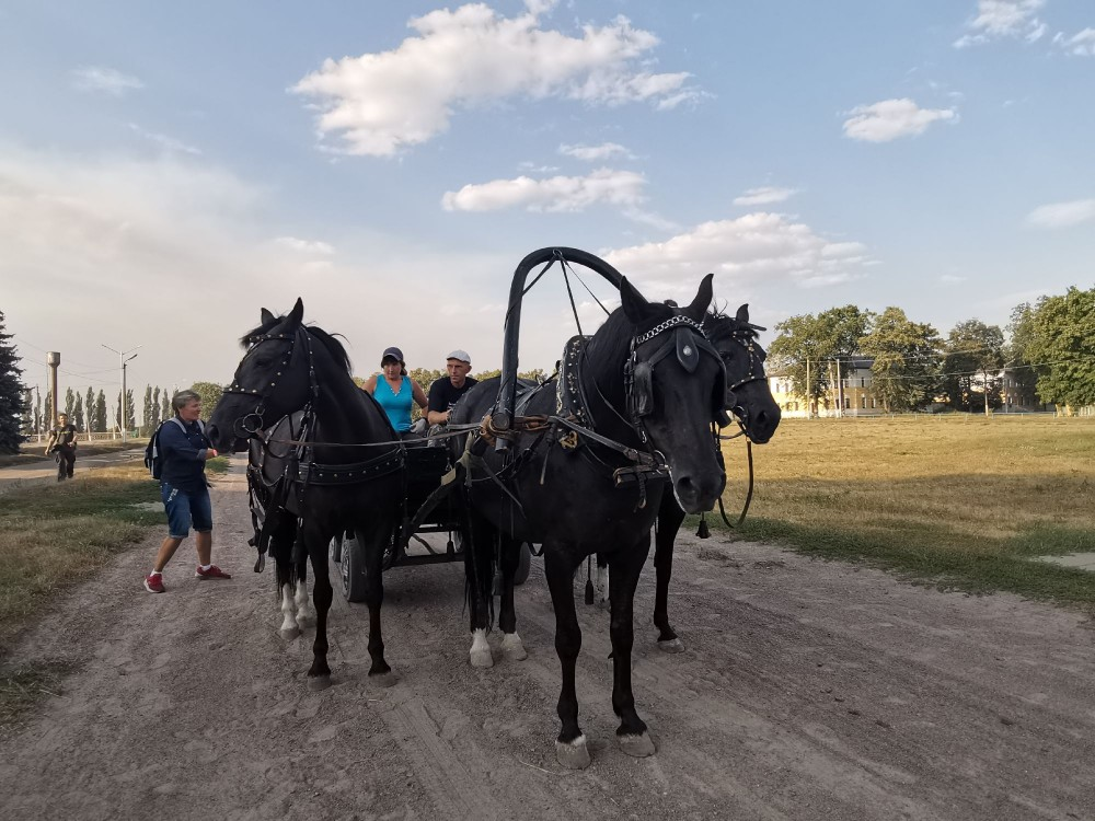 Тройка на конном заводе