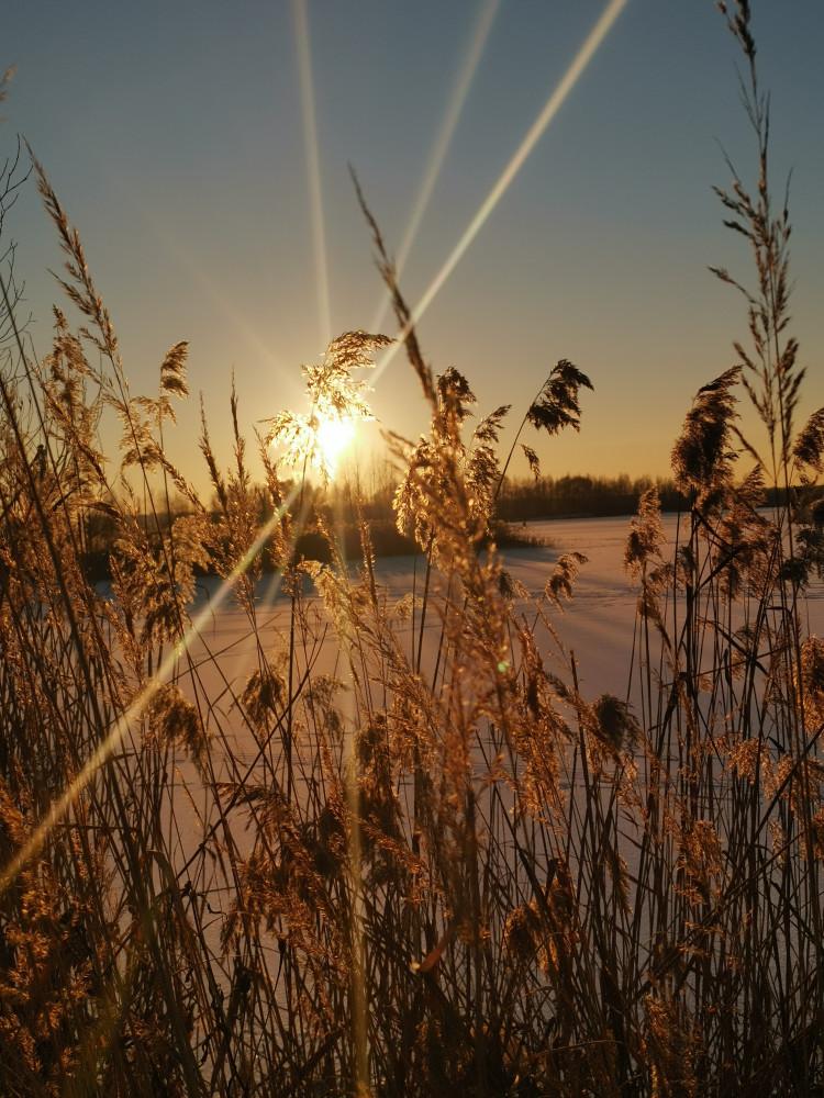 Зимнее солнце и зимние цветы