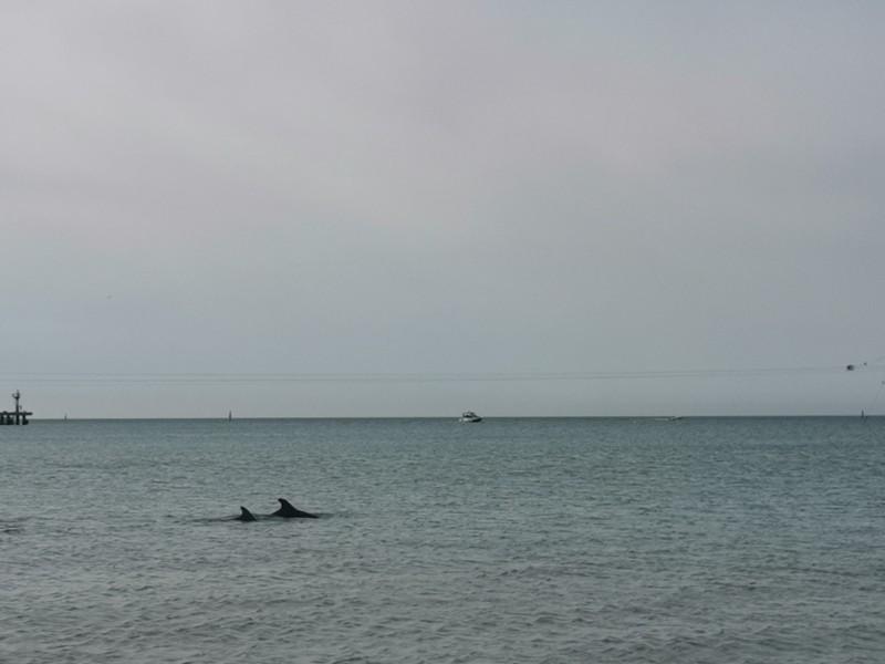 Дельфины Анапа
