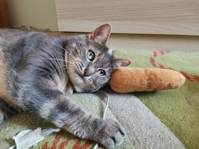 Моя кошка Мася Ивановна