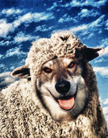 Vuk-u-jagnjecoj-kozi