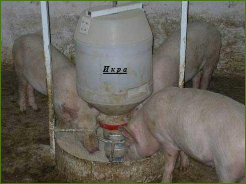 Как сделать самому кормушку для свиней - Sport holdem