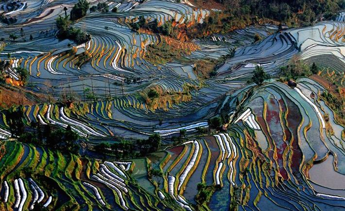 china_yunnan_province_terraced_fields_van_gogh