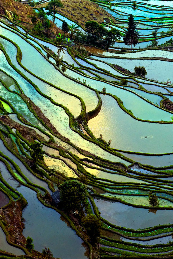 hani-rice-terraces-e-copy