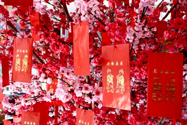 plum-blossoms-for-chinese-new-year