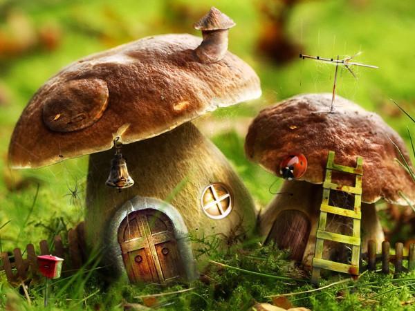 грибы-1