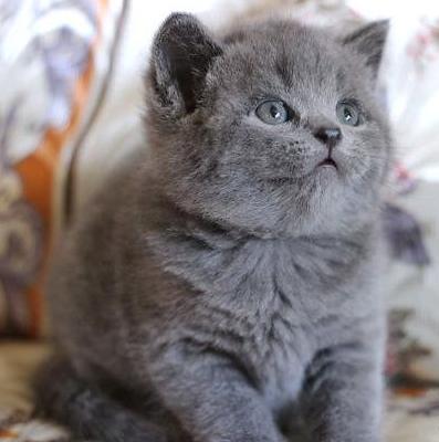 котя для крывмчанина