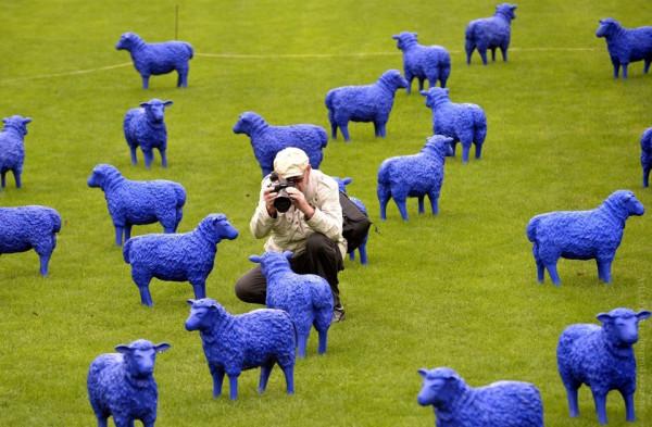 sheep_30122014_7