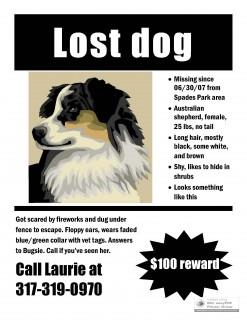 Bugsie: Lost Australian Shepherd.