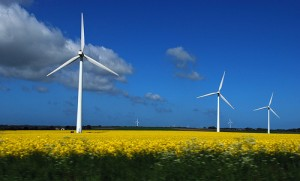 wind-turbines-yellow-field