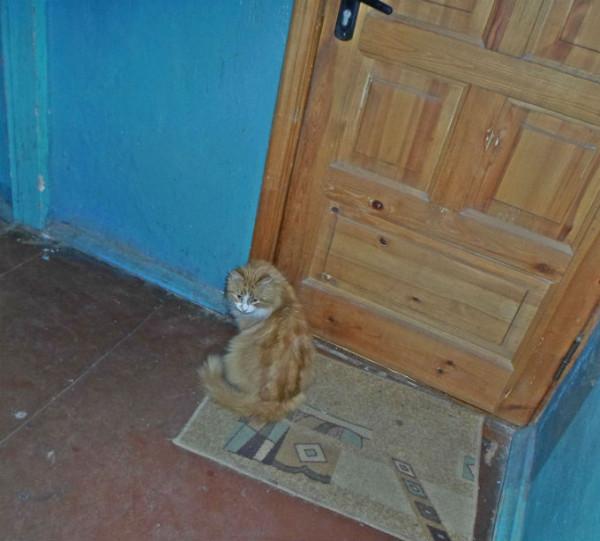 Верный кот (2)