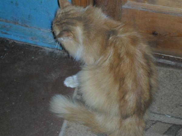 Верный кот (1)