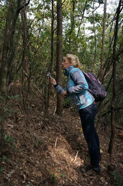 671b3f00 Бурелом, тропинки, заросли бамбука, внизу вокруг люди, мы идем. Первый  забор и тут же первая вырезанная дырка в заборе. Ммм… прошаренные люди  ходят сюда ...