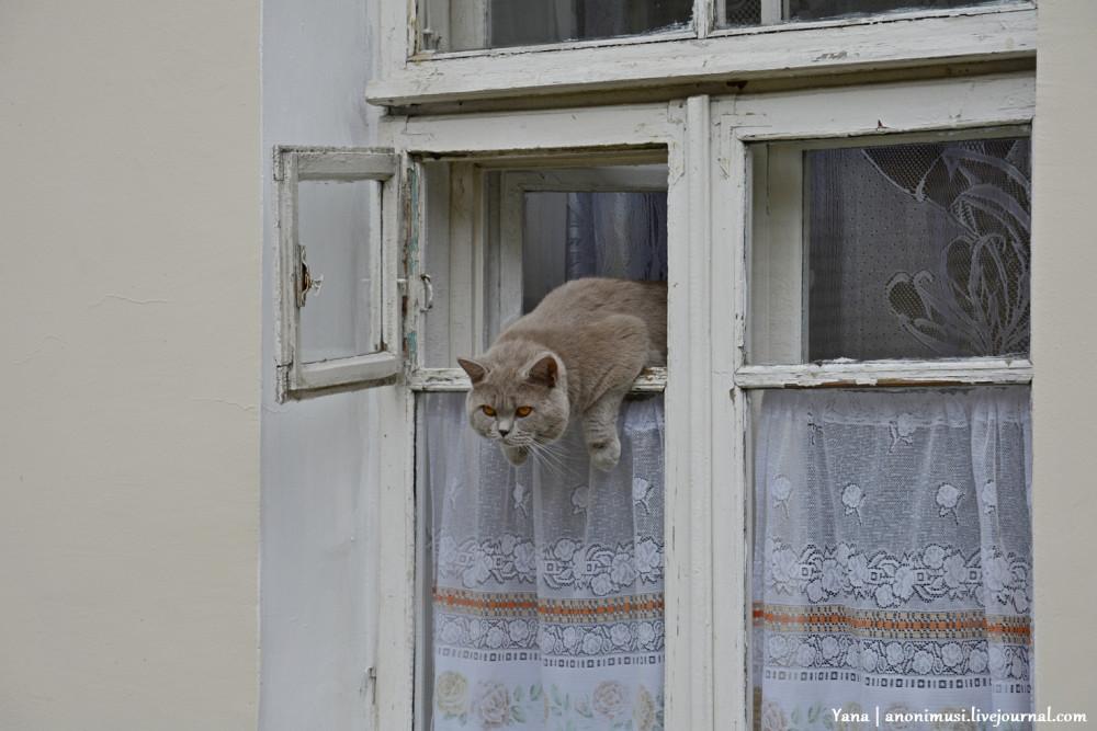 Коты Гомеля