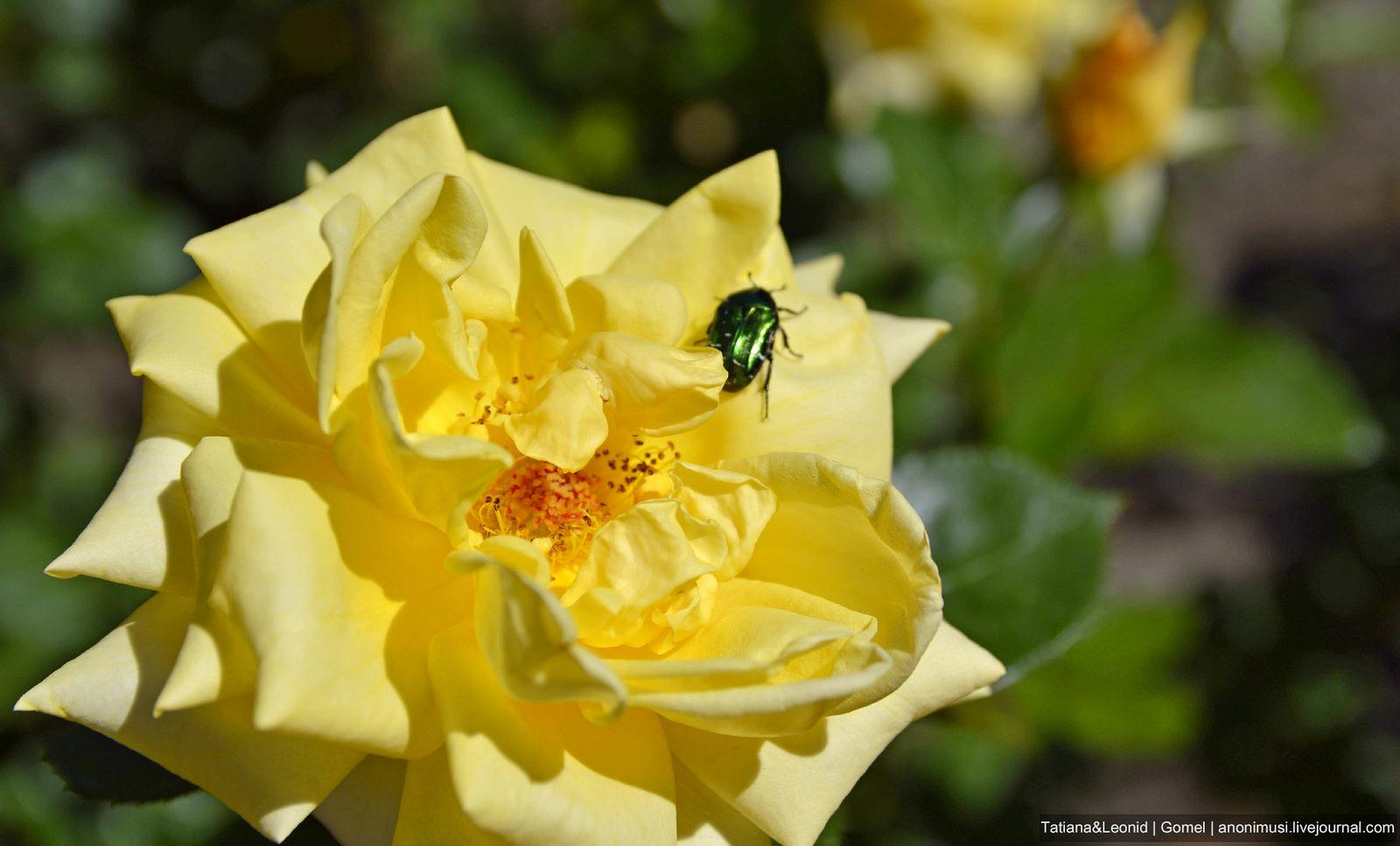 Летние цветы