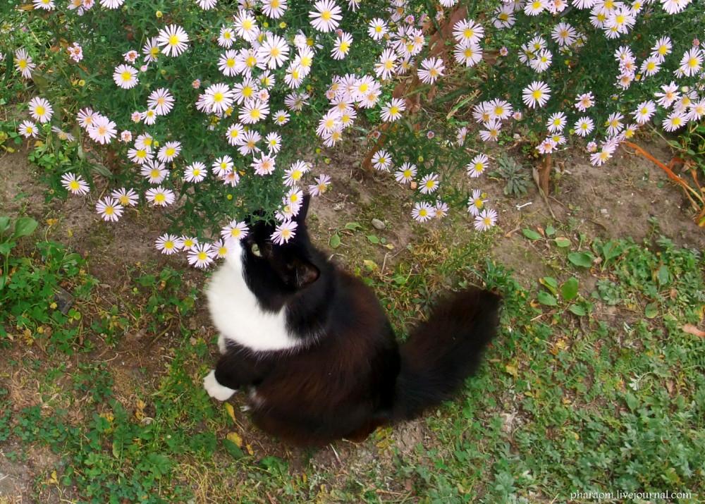 Кошка в шоке