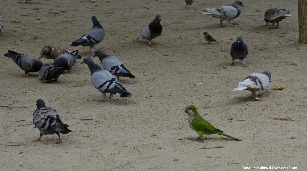 Попугаи в Гомеле