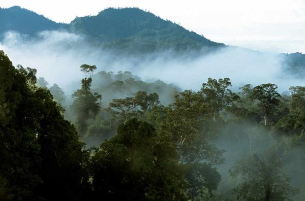 Борнео. 7