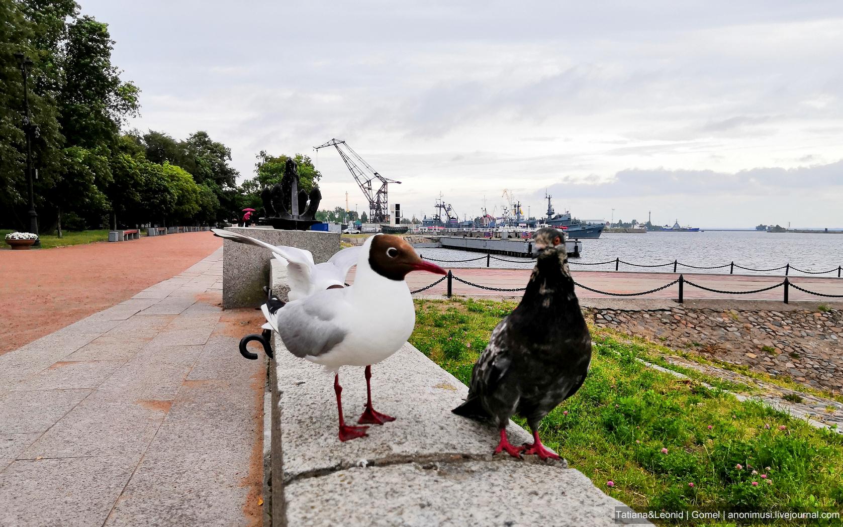 Чайки - символ Санкт-Петербурга