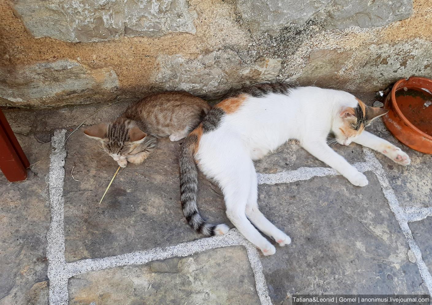 Будванские котики