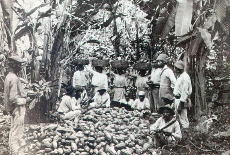 Сбор какао-бобов. Тринидад. 1897 г.