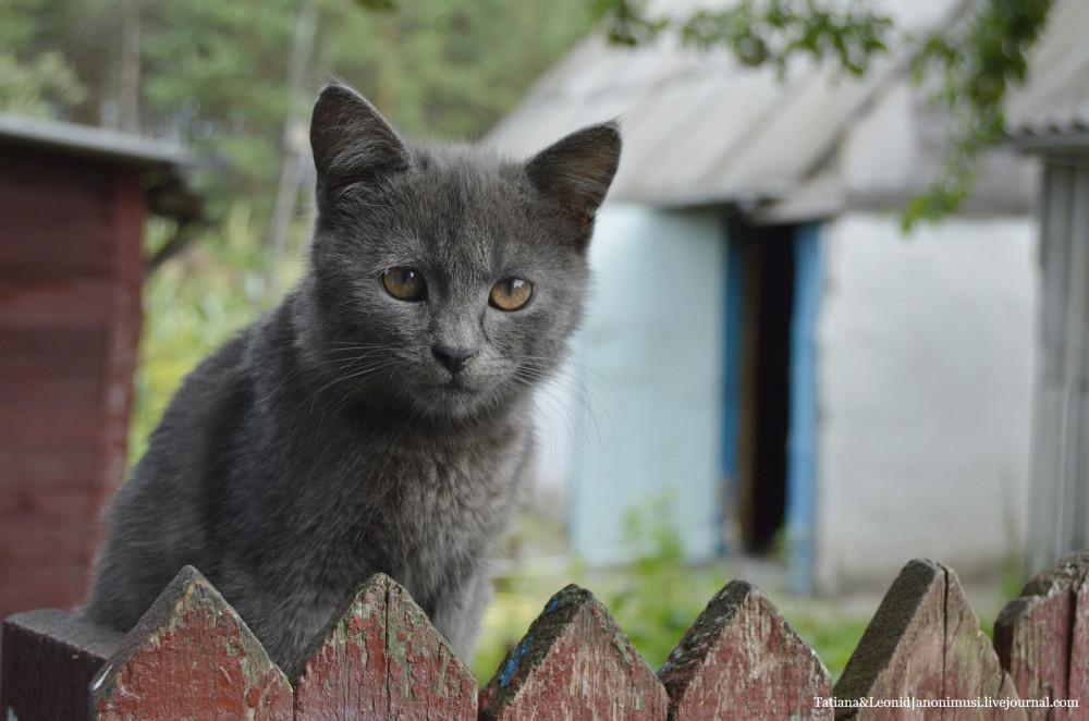 Грабовка-Баштан