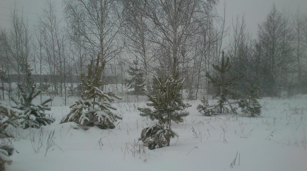 Эмма в Беларуси