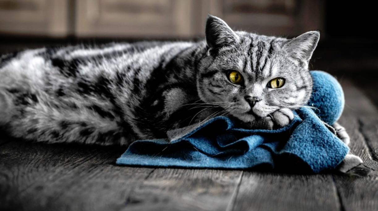 Котов надо не лечить, а усыплять