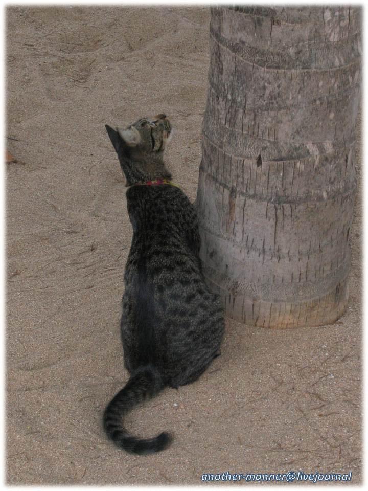 Pattaya_cat00