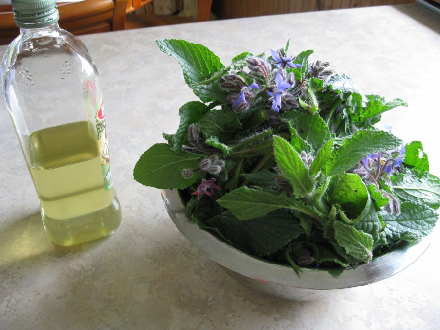 Borage for infusing