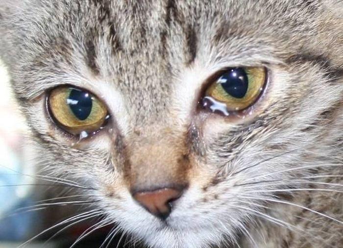 Котик плачет