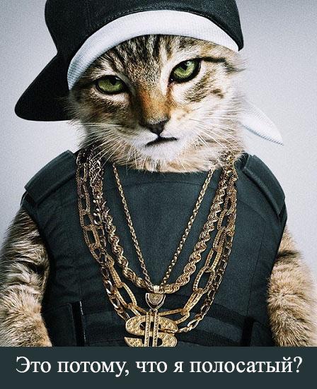 Кот в шляпе.jpg