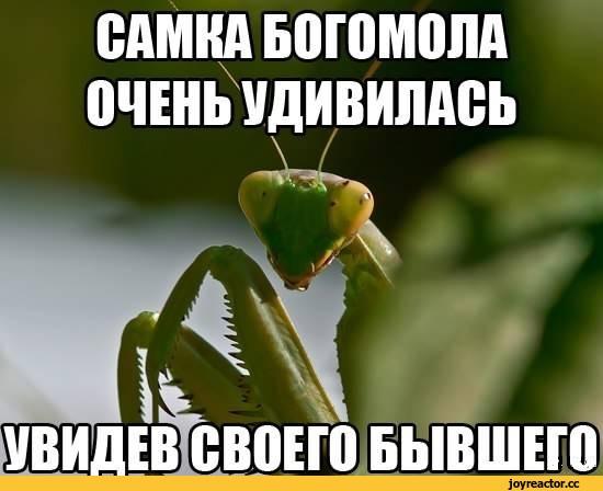 богомолл