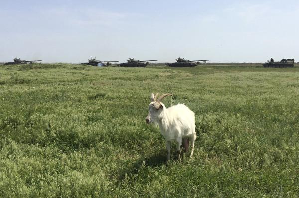 Даже козёл знает: войска России на Донбассе есть!