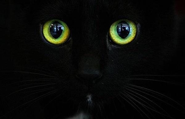 bucharest_cat_beauty_contest00