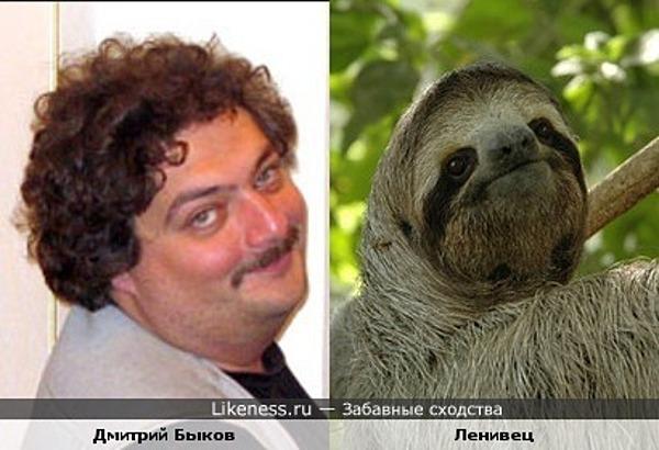 Dmitriy_Bikov_sloth_big