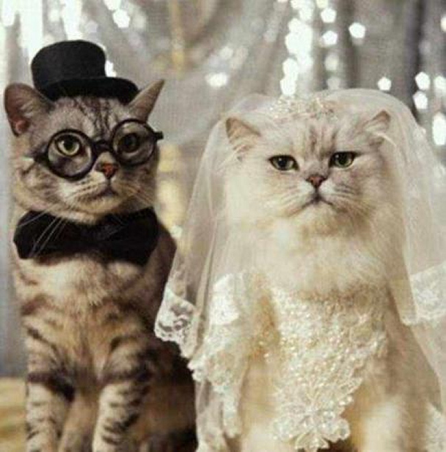 mariage_chats